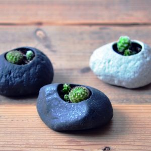 Plants Rock